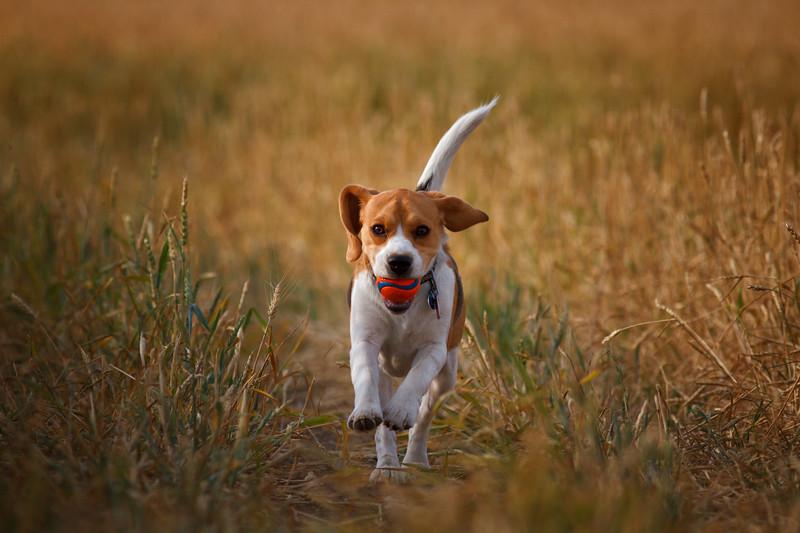 Wild Dog Cometh