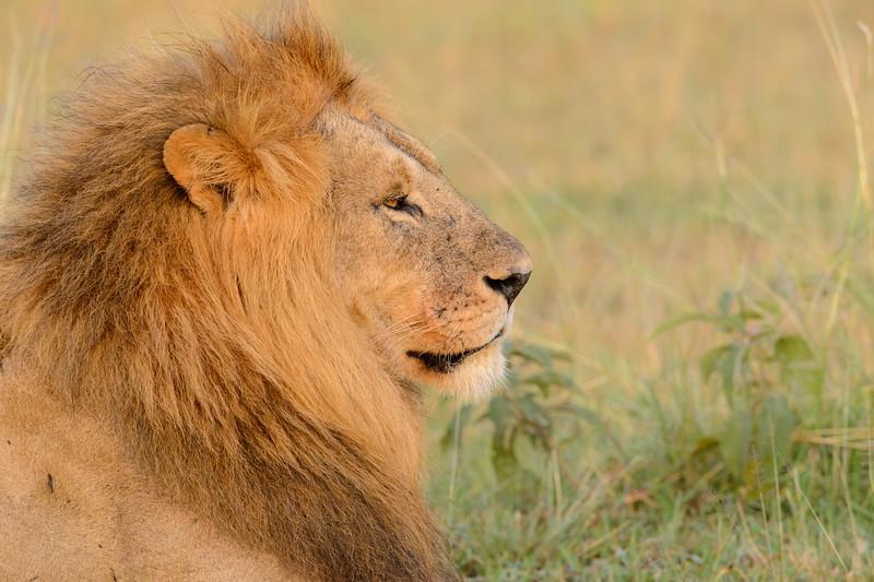 20160215__KET7173_Serengeti_Day_7.jpg