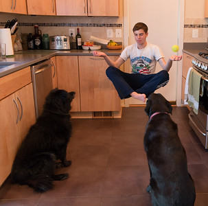 Dog Master