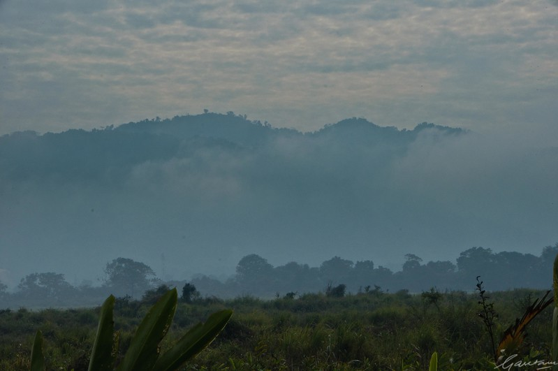 13: Kaziranga Forests 24 December 2011