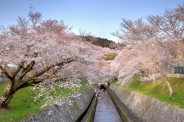 Biwako Canal & Miidera