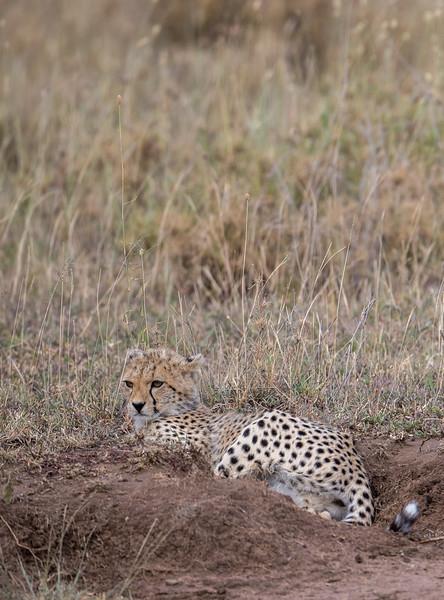 Tanzania_Feb_2018-1213.jpg