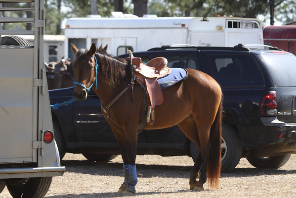 Deep Dixie Association Horse Show 2/20/10