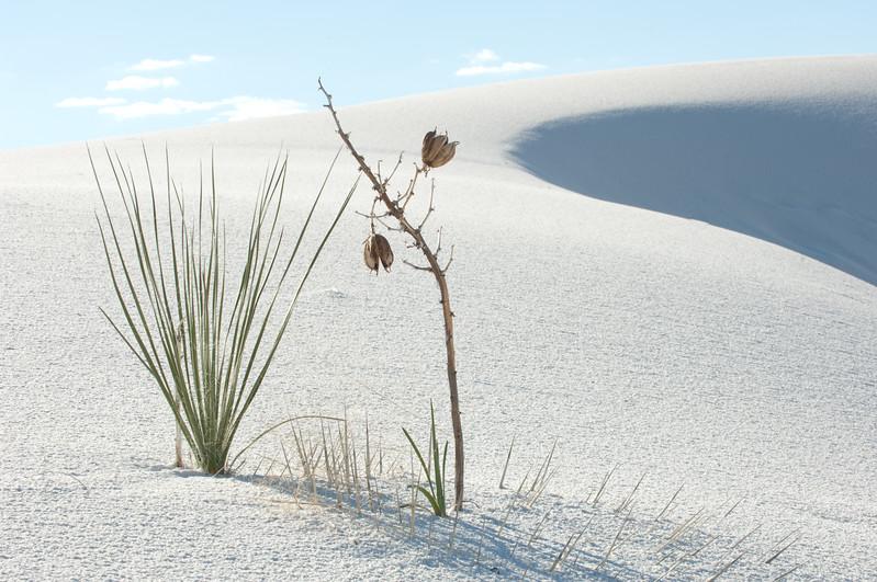 20081007 White Sands 037.jpg