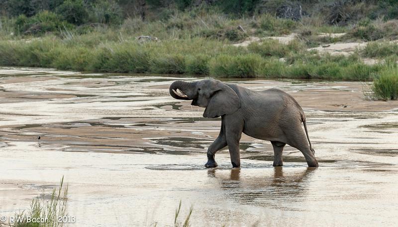 Sand River Elephant