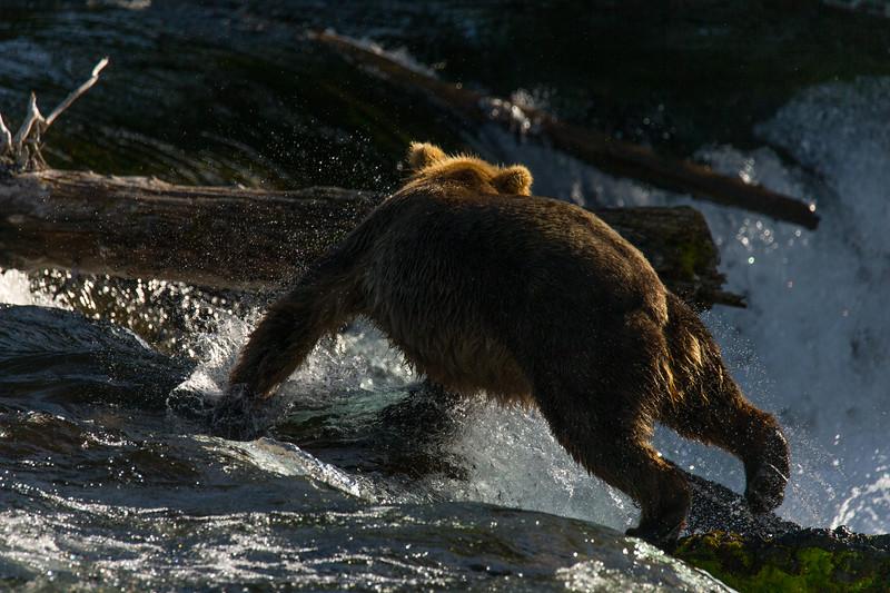 Katmai Bears-74.jpg