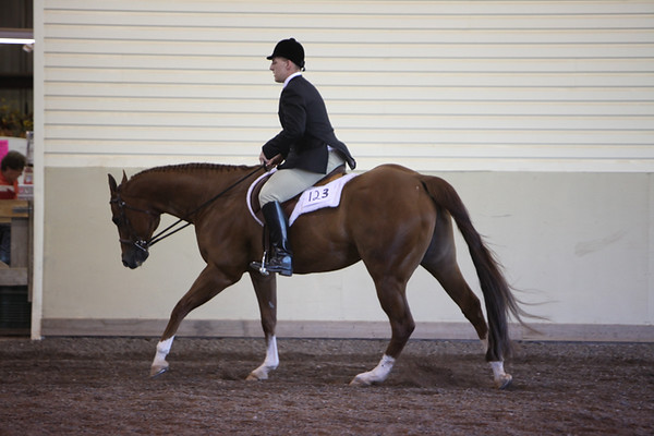 Youth Hunter Under Saddle