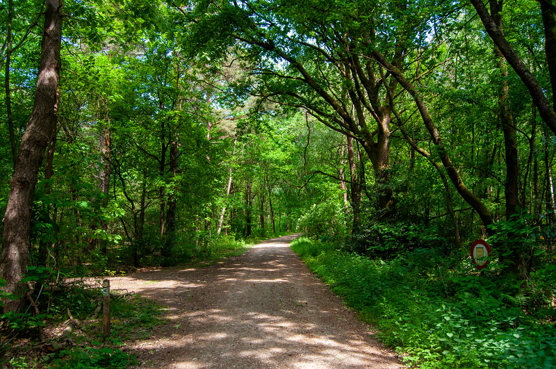 Nationaal Park Hoge Kempen - Duinengordel, omgeving Donderslag 17.jpg