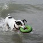 farley pups 089-2.jpg