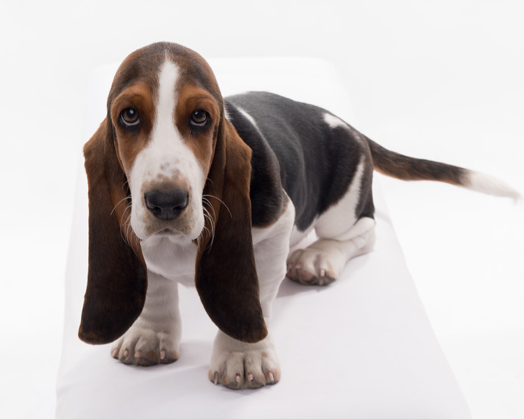 Taylor dogs and puppies too!-9537.jpg