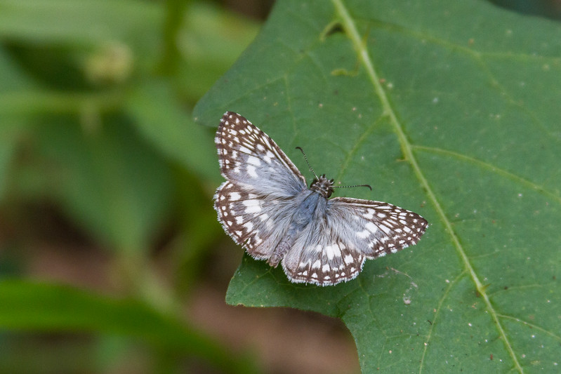 Brazos Bend Wildlife