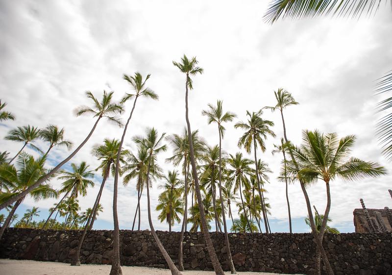 Hawaii2019-337.jpg