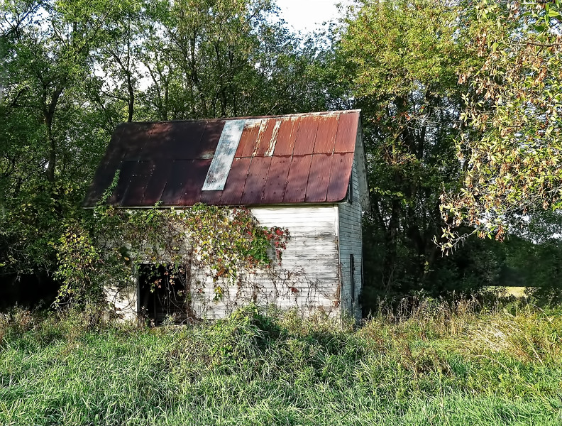 OLD VINE-COVERED SHED