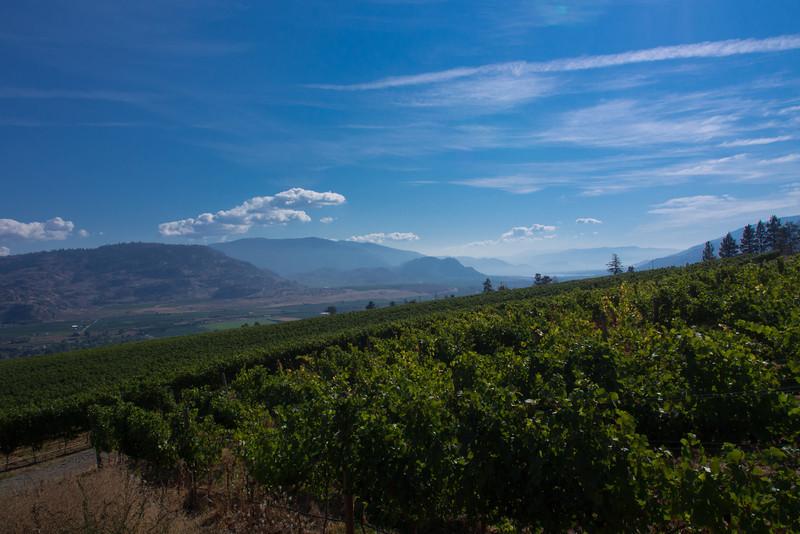 hills vineyard 3.jpg