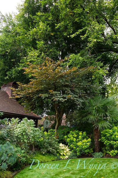 Trachycarpus fortunei - Cercis landscape_5202.jpg