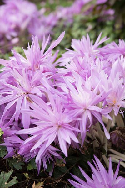 Chicago Botanic Garden 035.jpg