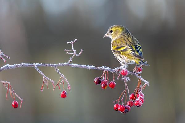 Garden Bird Photography For Beginners