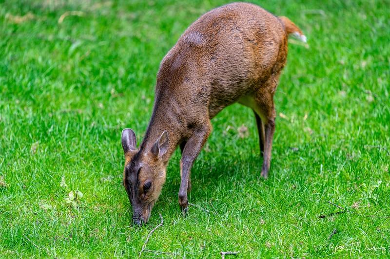 British Wildlife Centre_Z6-7347.jpg