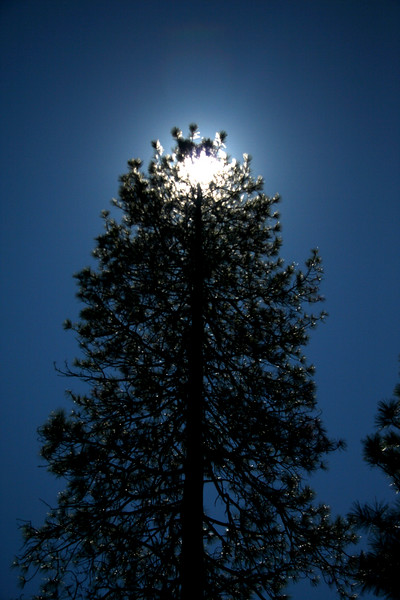 Arboreal Eclipse