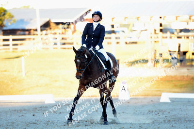 131013 USEA Horse Trial