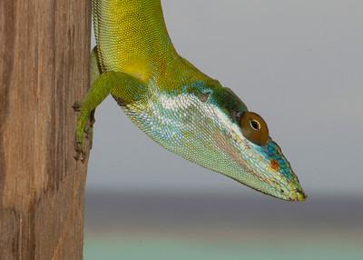 Honduras 2015: Roatan (Fauna and Flora - identifications incomplete)