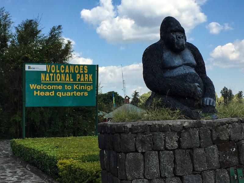 Saddest gorilla we saw