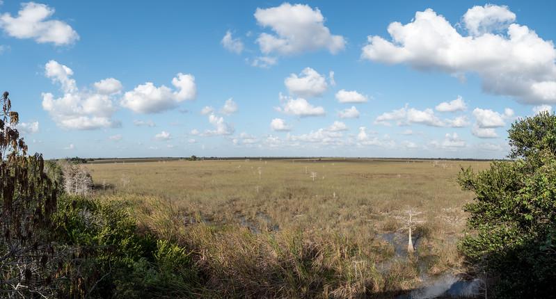 Mahagony Lookout Everglades