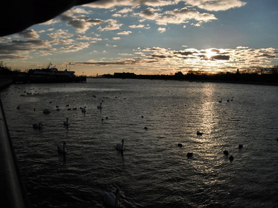Sheepshead Bay Nov 24 2010