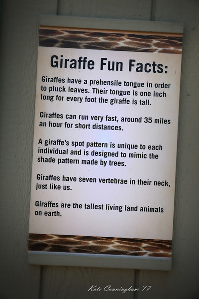 IMG_0322_SD ZOO_Giraffe Fun Facts_8.10.17.jpg