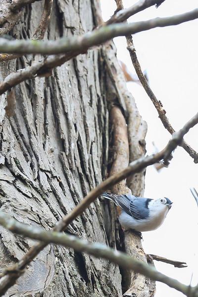 birds-105.jpg