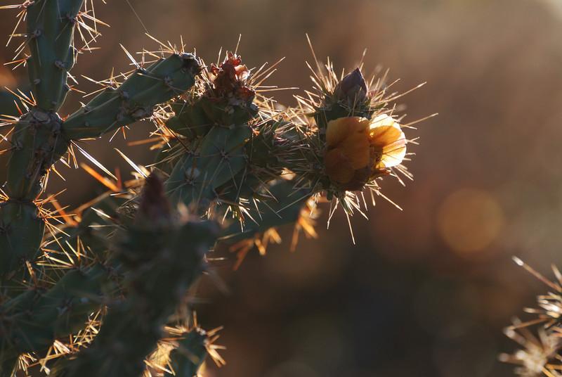 Cactus,  Dirt &  Rocks & Stuff