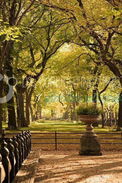 Fall-Foliage-Flowers_batch_batch.jpg
