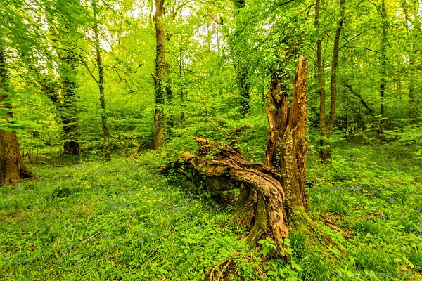 A walk along the Lyd, Forest of Dean (2)