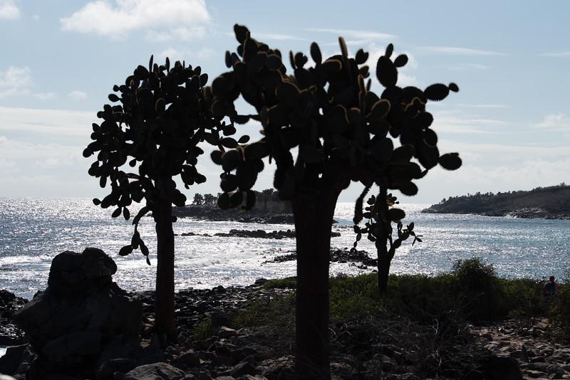 Galapagos-2189.jpg