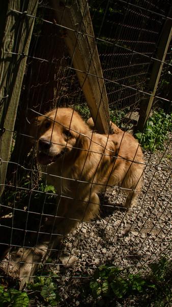 PuppyParty18-336.jpg