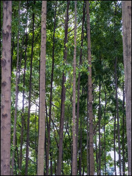 200109 CNY at Suria 16.jpg