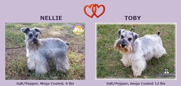 Nellie & Toby Puppies, DOB 9/09/2020