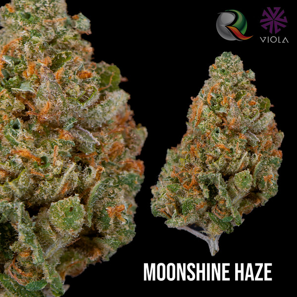 moonshine haze2.jpg