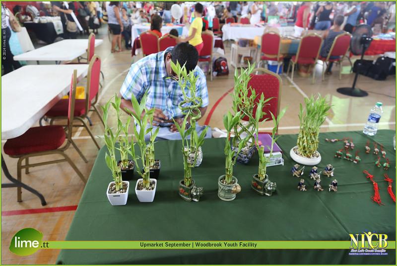 CSR's Lucky Bamboo Plants