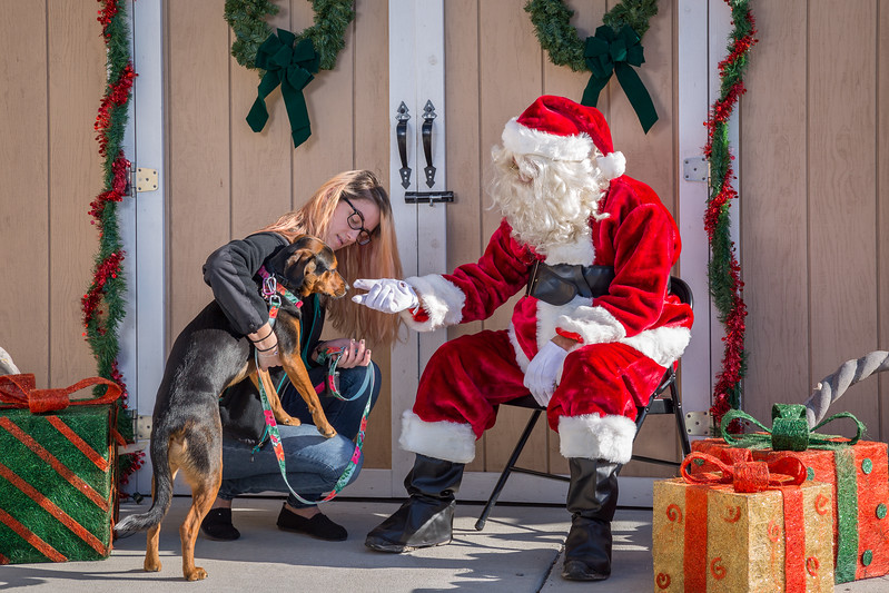 Pet Pictures With Santa-75.jpg