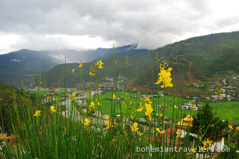 flowers and Paro Valley.jpg