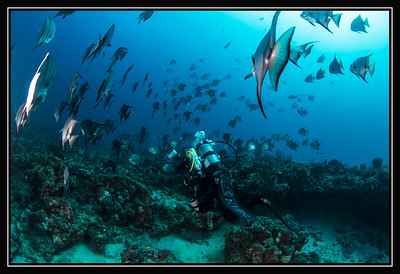 Assorted Marine Life & Landscapes Gallery