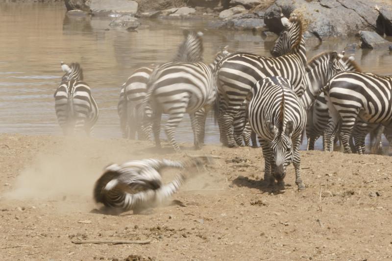 Kenya 2015-04770.jpg