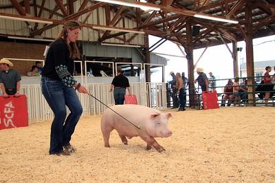 Market Swine 10