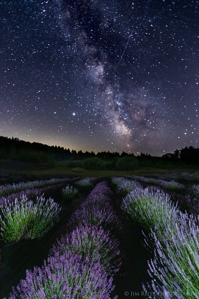 The Milky Way rises above lavender fields on San Juan Island, Washington.