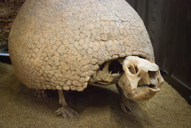Tarija 201205 Museum Paleontology (5).jpg