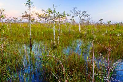 Florida, Everglades National Park,佛罗里达,大沼泽地国家公园