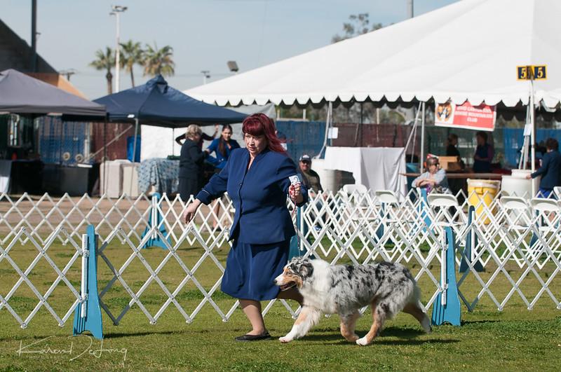 20170205_Australian Shepherds_Lost Dutchman Kennel Club-146.jpg