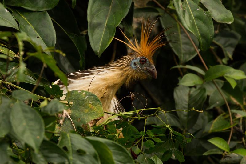 Rainforest121.jpg