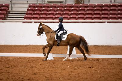 Horse 155